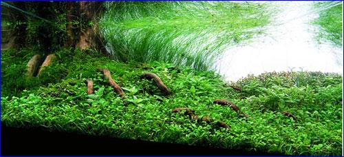 ADA Green Brighty STEP 2 - удобрения для растений в аквариуме АДА.