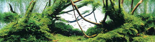 ADA Aqua Soil Normal Africana - грунт для растений в аквариуме.