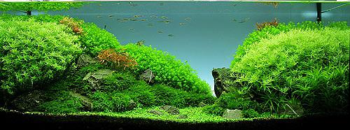Удо Ермолаева МИКРО+ ежедневное удобрение, содержащее легкоусвояемое железо и смесь всех необходимых микроэлементов для насыщенного цвета растений.