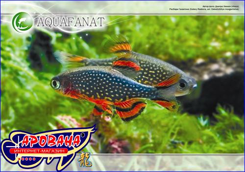 Календарь AQUAFANAT для аквариумистов на 2011 год.