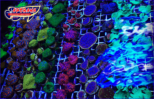 AQUAXER Coral Frag Plate (ножка) 1 шт.