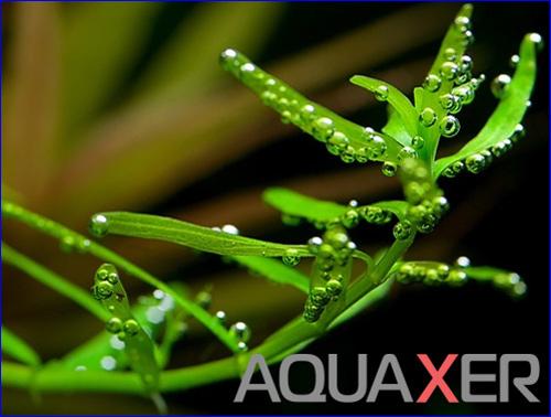 Хелатированное железо для аквариумных растений.