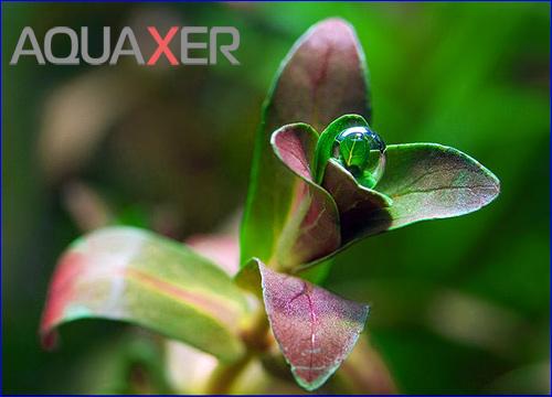 Глюконат железа для аквариумных растений, купить железо глюконат растениям в аквариуме