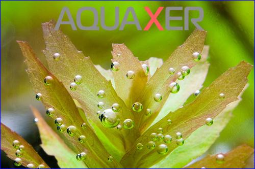 Хелатированное железо растениям в аквариуме.
