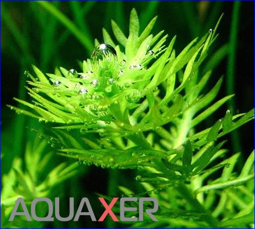 Калий для аквариумных растений.