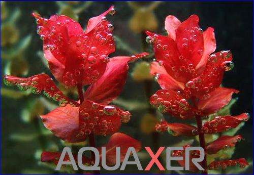 Макроудобрения без нитратов для аквариумных растений.