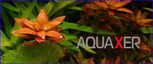 Удобрения для роста аквариумных растений