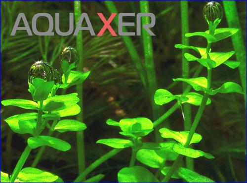 Микроэлементы для аквариумных растений.