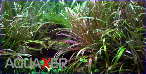 Микроэлементы для выращивания аквариумных растений