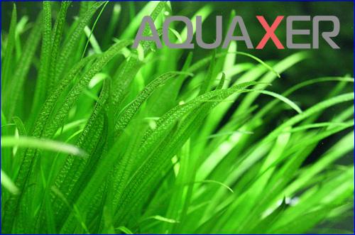 Микроудобрения для аквариумных растений, купить микроэлементы для растений в аквариуме, удобрение микро.