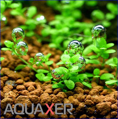 AQUAXER набор для реминерализации воды прошедшей фильтр обратного осмоса.