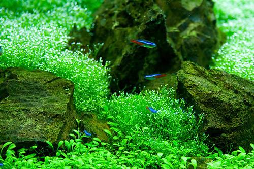 Удо Ермолаева МАКРО+ 50 ml, - макроэлементы для нано и мини аквариума.