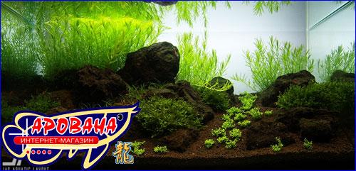 Benibachi Black Soil Fulvic Normal - грунт для аквариумных креветок.