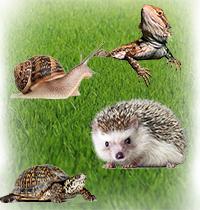 Новинка! Корма для рептилий, улиток и ежей.