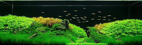 Удо Ермолаева МАКРО+ ежедневное удобрение, содержащее калий, азот и фосфор, необходимые для быстрого и пышного роста растений.