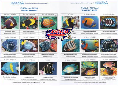 Каталог Морской Аквариум - на чистых водах. Морские рыбы.  Каталог для покупателя.