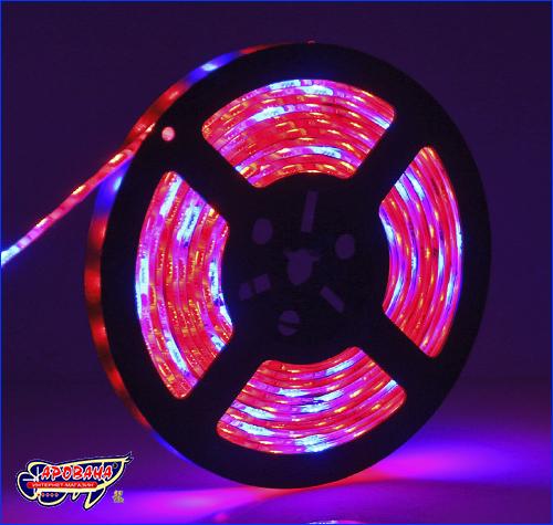 LED лента, SMD 5050, фитолента 5+1 (красный + синий).