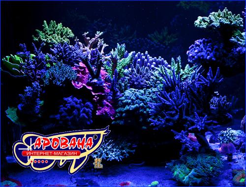 Аквариумные рифы