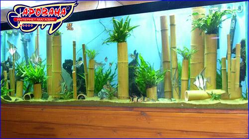 Бамбук для оформления аквариума.
