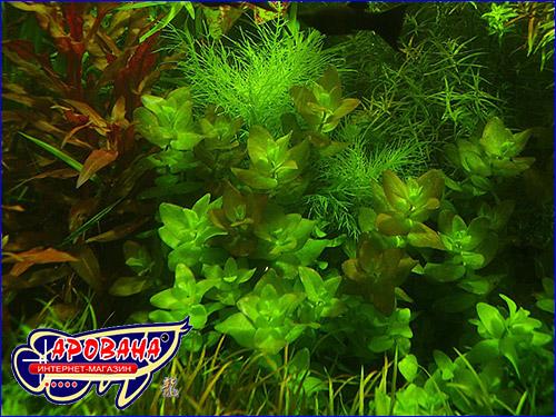 Удобрения растений AquaSys Micro+K 2900 ml.