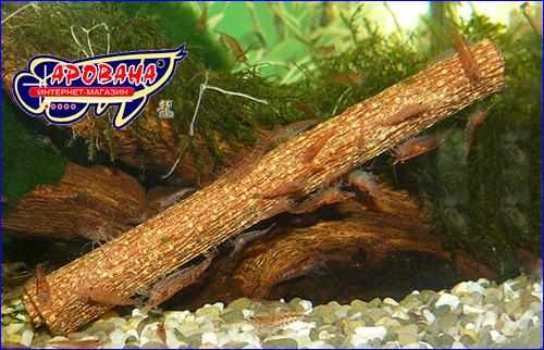 Кора Кетапанга в аквариуме с креветками.