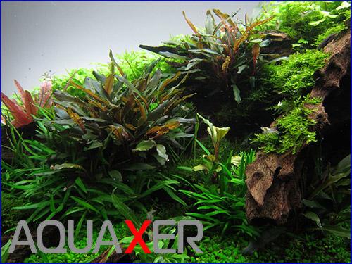 Комплексное удобрение с микроэлементами для аквариума.