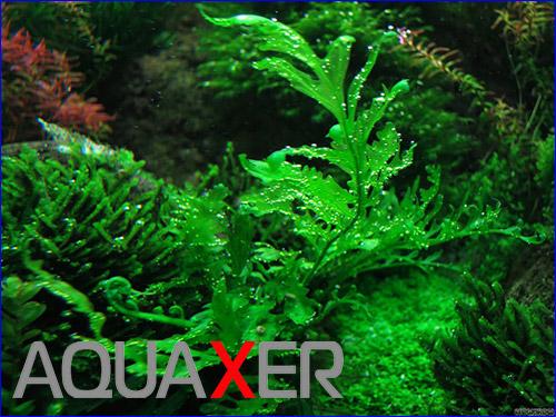 Удобрение для аквариумных растений с микроэлементами