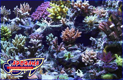 Морская соль для мелкополипных кораллов.