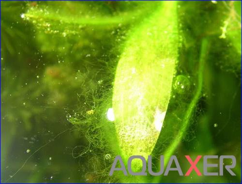 Сайдекс (Cidex Activated Glutaraldehyde). Цена на сайдекс.