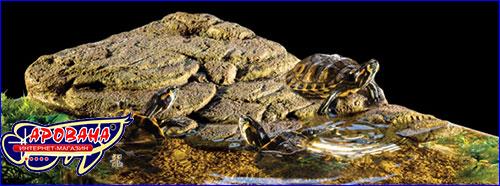 Островок для красноухих черепах.