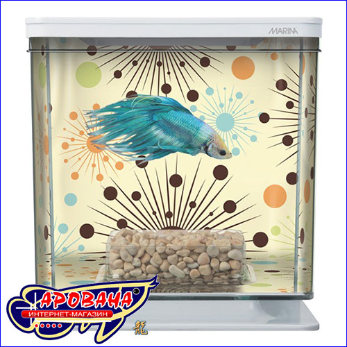 Декоративный аквариум для петушка.