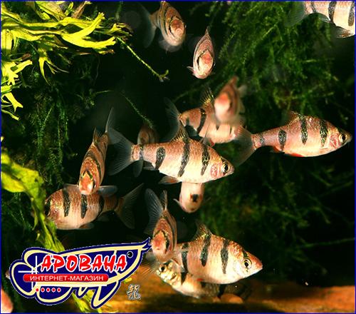 Гранулы для аквариумных рыбок.