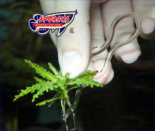 Шпилька, JBL ProScape Plantis.