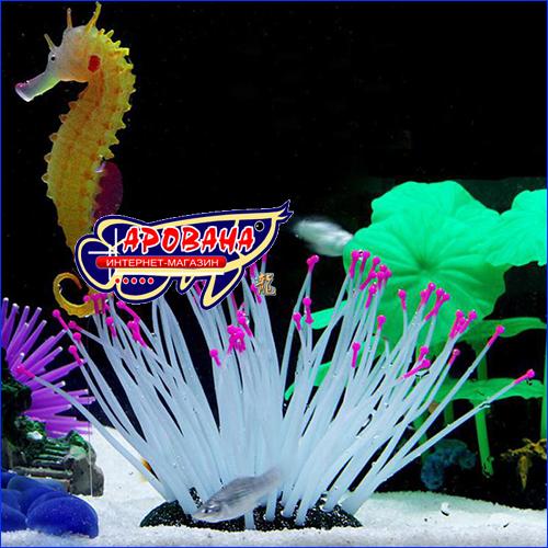 Морской аквариумный конек