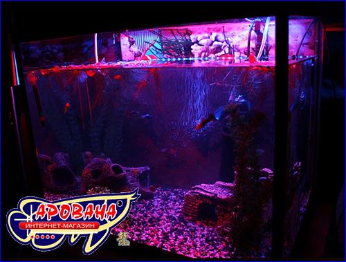 Светодиодный свет в аквариум