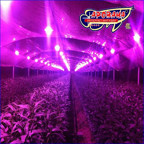 фито светодиод для растений