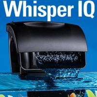 Whisper IQ