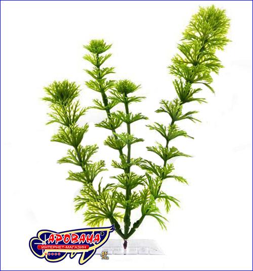 Декоративное растение для нано аквариума.