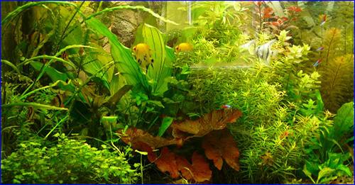 Растения, выращенные на турмалиновых таблетках.