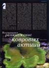 Вегетативное размножение ковровых актиний.