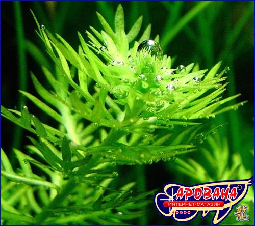 Птеро Флора Макро - макроудобрения для растений Ptero.