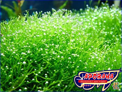 Ptero Флора Микро, - комплекс микроудобрений и витаминов для растений.