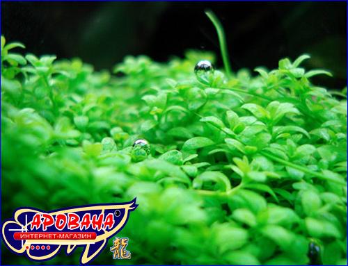 Птеро Флора Профи - комплексное удобрение аквариумным растениям.