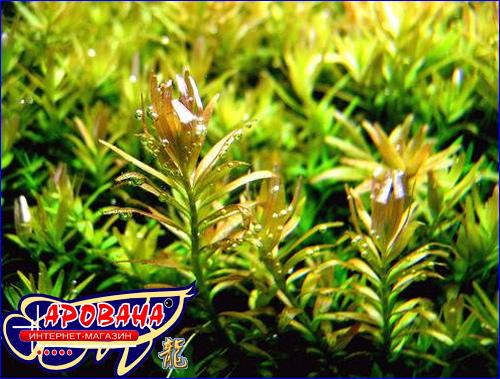 Ptero Флора Ростин - удобрение с калием и железом для растений в аквариуме.
