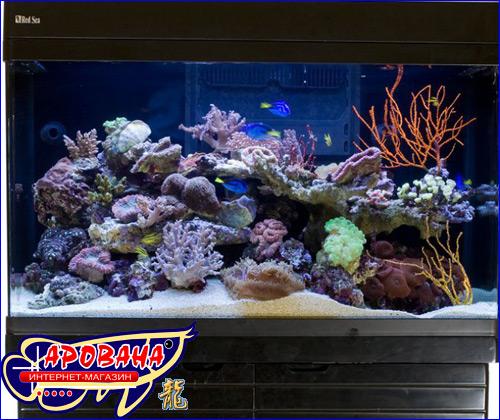 Red Sea Max 250, - морской аквариумный комплект.