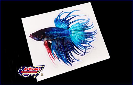 Виниловая наклейка Betta fish, 11х13 см.