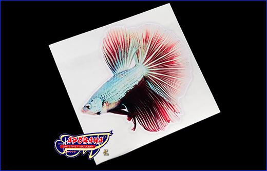 Виниловая наклейка Betta fish, 12х13 см.