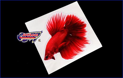 Виниловая наклейка Betta fish, 11.5х13 см.