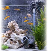 Самп для пресноводного аквариума.
