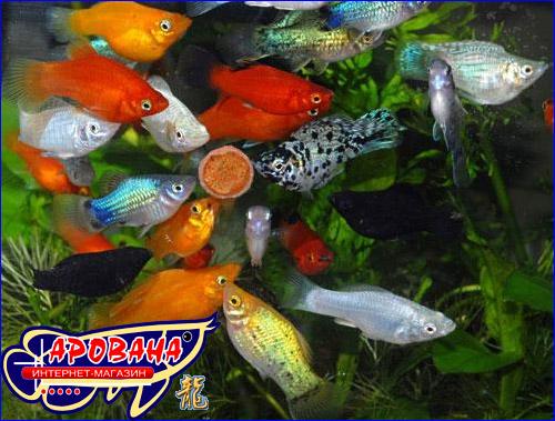 Аммиак - это сильный яд, смертельный для рыб даже в небольших концентрациях (0,5мг/л).